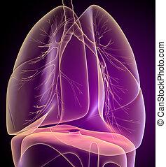 röntgen látás tanulni