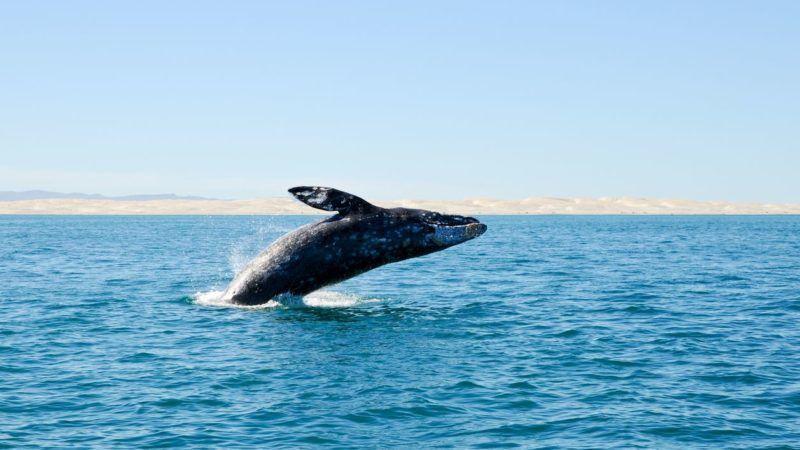 Csodálatos látvány – ilyen, amikor a bálnák szivárványt fújnak a levegőbe