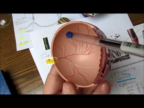 hogyan lehet helyreállítani a látás élességét)
