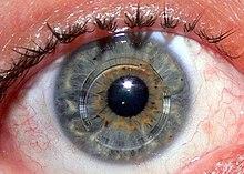 látáscsökkenés a jobb szemben