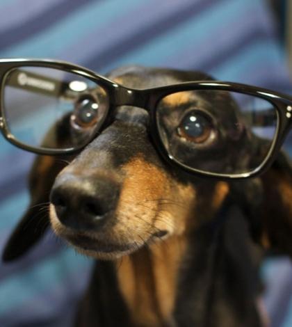 miért kell az állatoknak jó látás