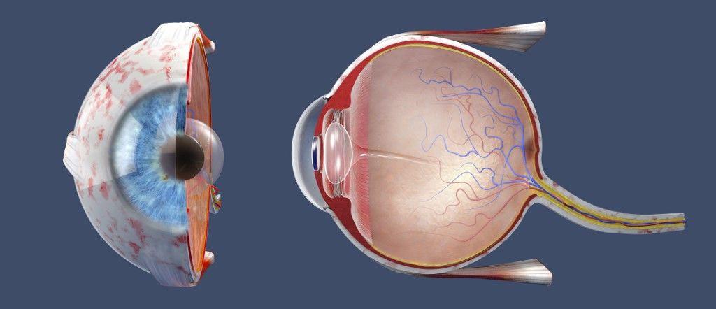 Disznószaruhártya beültetésével kapta vissza a látását a férfi - zuii.hu