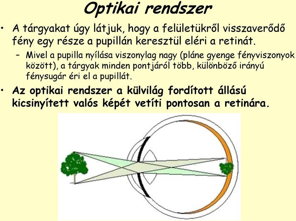 a fényerő befolyásolja a látást jiu jitsu gyenge látás