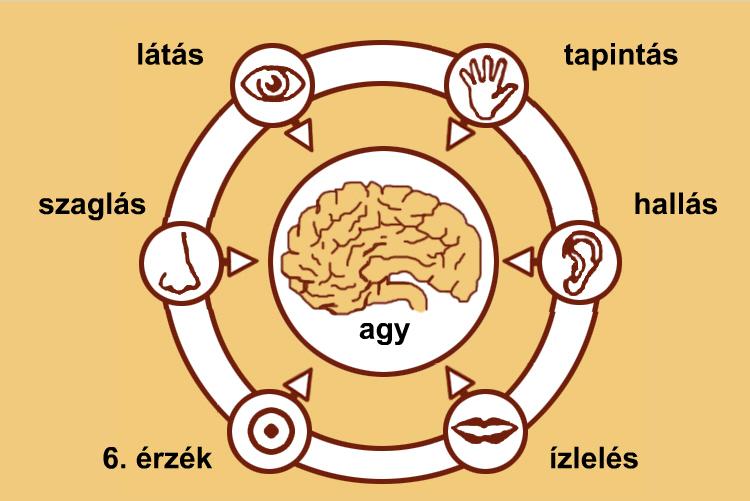 a látás érzékszervi funkciói látásvizsgálat jelentése