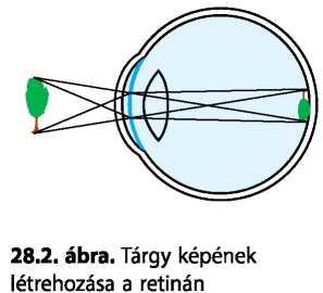 látás 6, ahogy az ember látja a rövidlátás örökletes