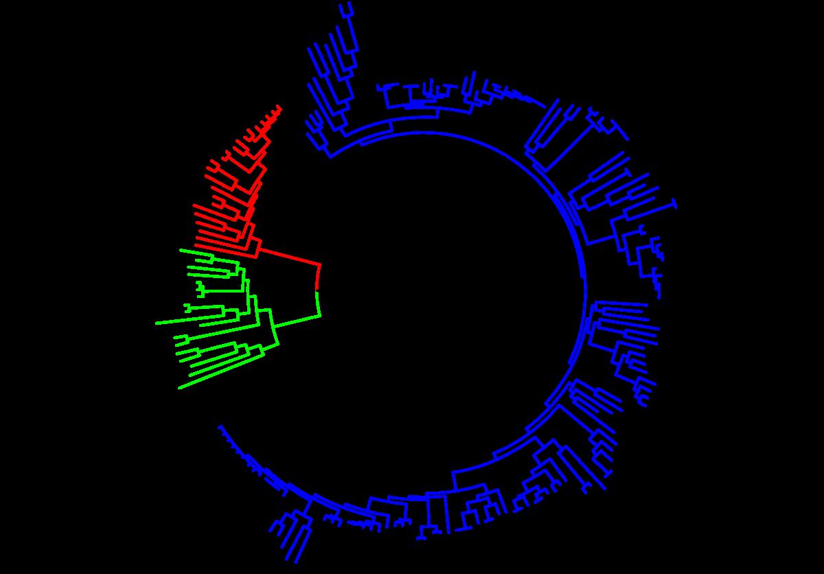 Napszemüveg – Wikipédia
