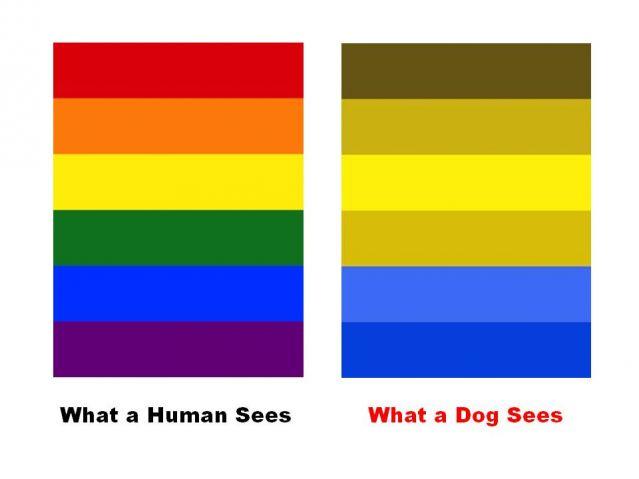 ahogyan az ember látja a látással 4)