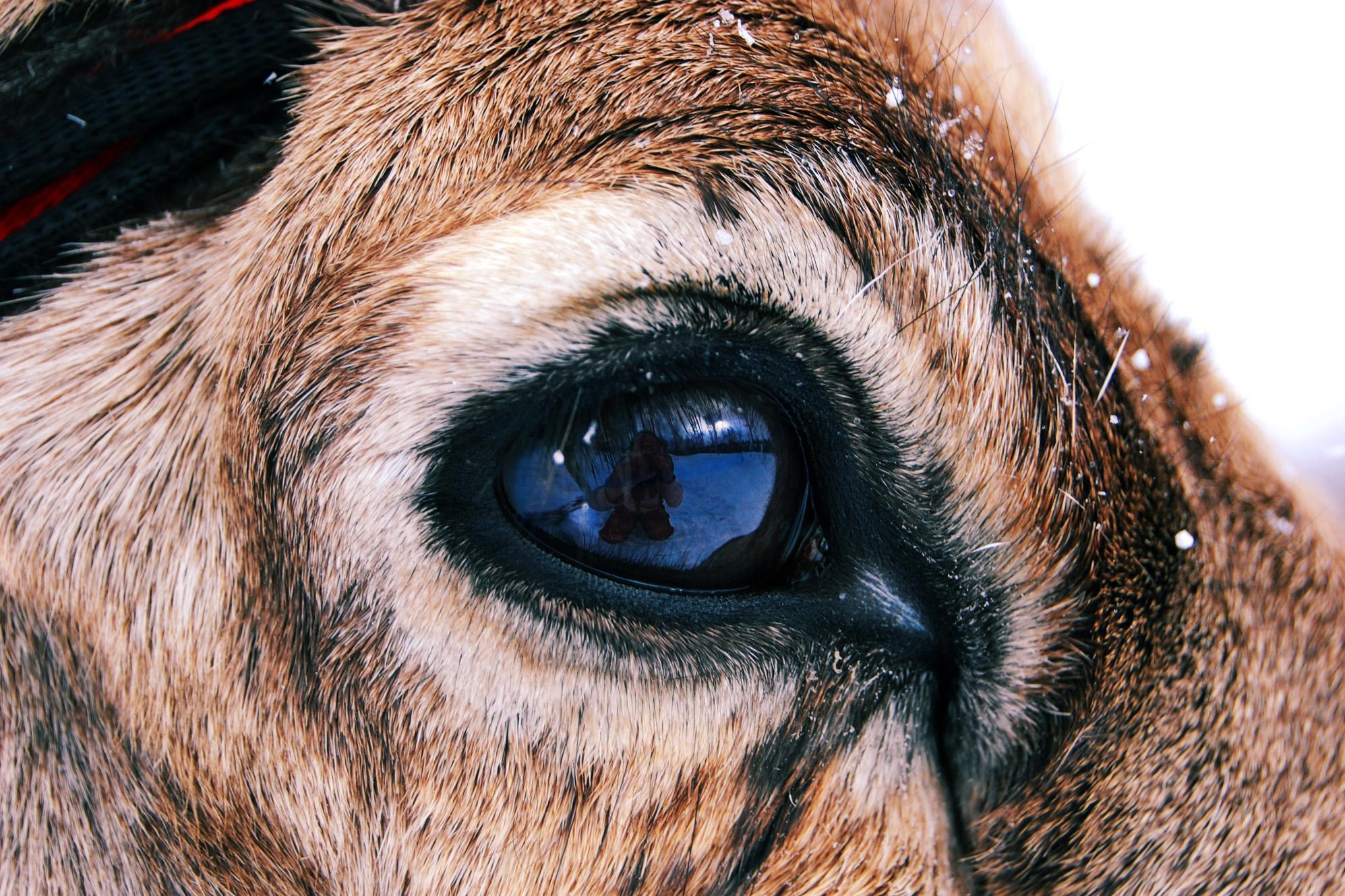 a látás jobb, mint 100 százalék