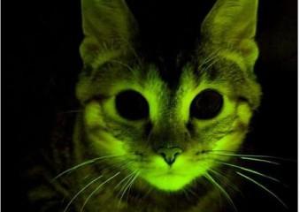 hogyan látják a macskák a látást Állandóan hunyorítom a szemem