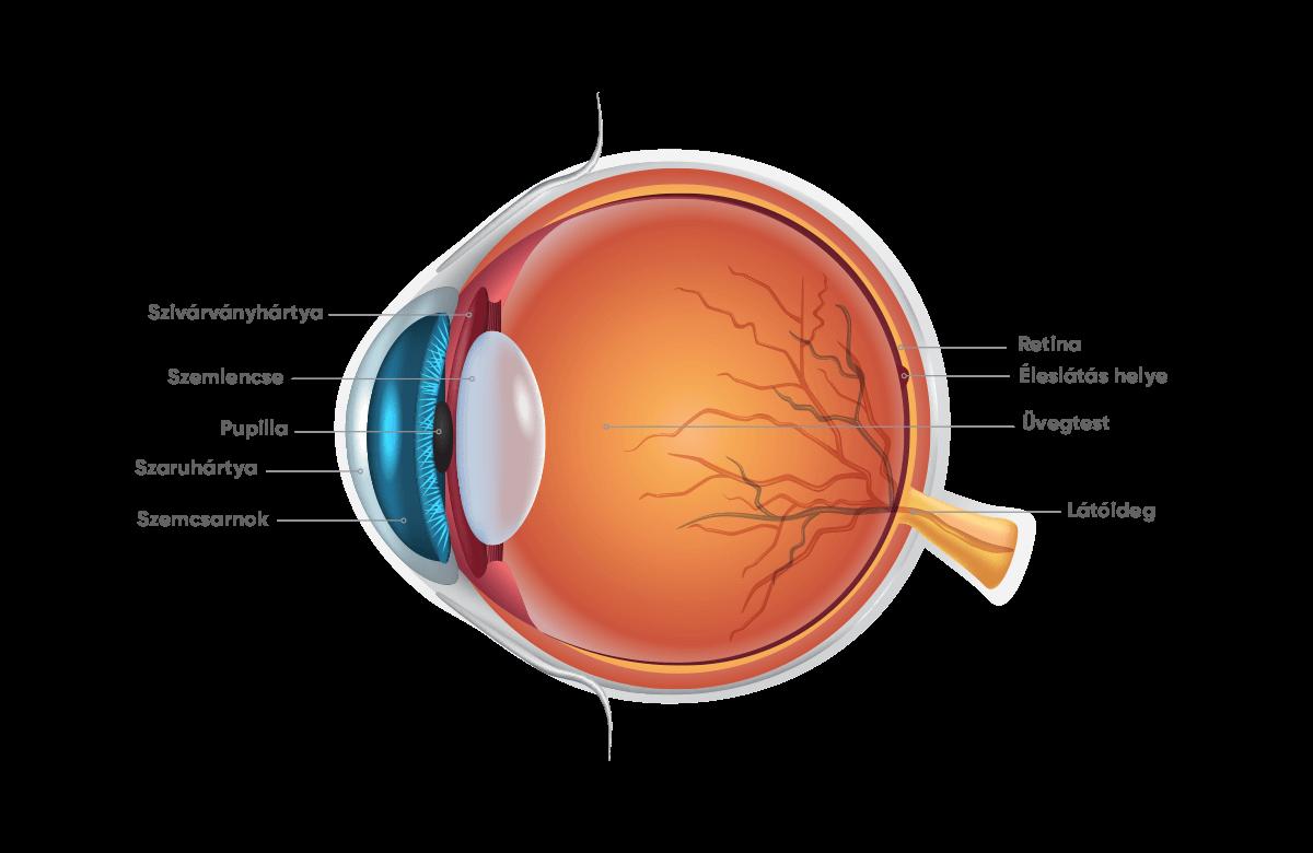 Ophthalmoferon és a pupilla dilatációja - Rövidlátás September