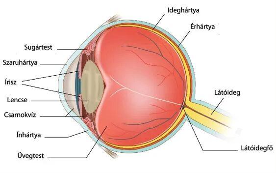 a látás különböző szintjei a szem körül)