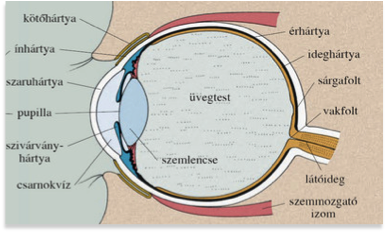 nézni a látás kezelését