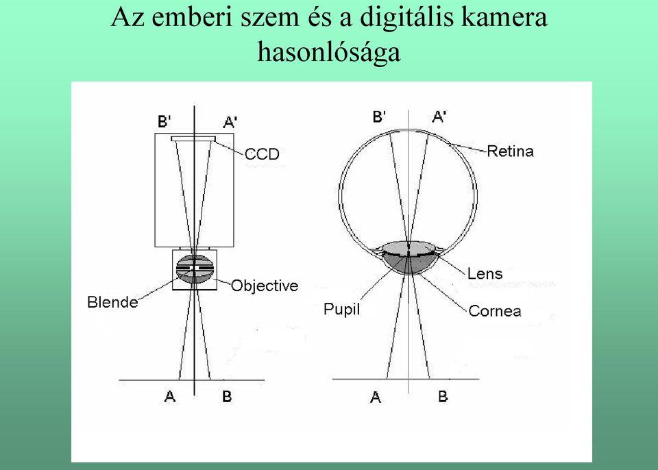Látótér Látómező Látásszög Binokuláris látás Szem, szög, szög, binokuláris látás png