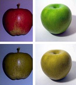 gyenge látású gyümölcs